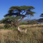 南アフリカ:黄熱予防接種証明書の携行について(その2)